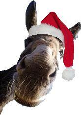 [4 dicembre – Natale in Collina a Treppo Grande]